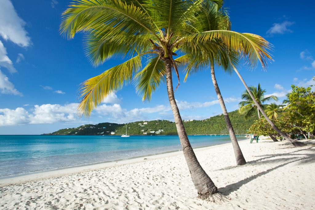 Palm trees on the beach in St. Thomas - guide to the West Indies